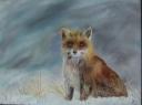 fox1-001