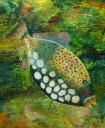 fish nets2 009-001